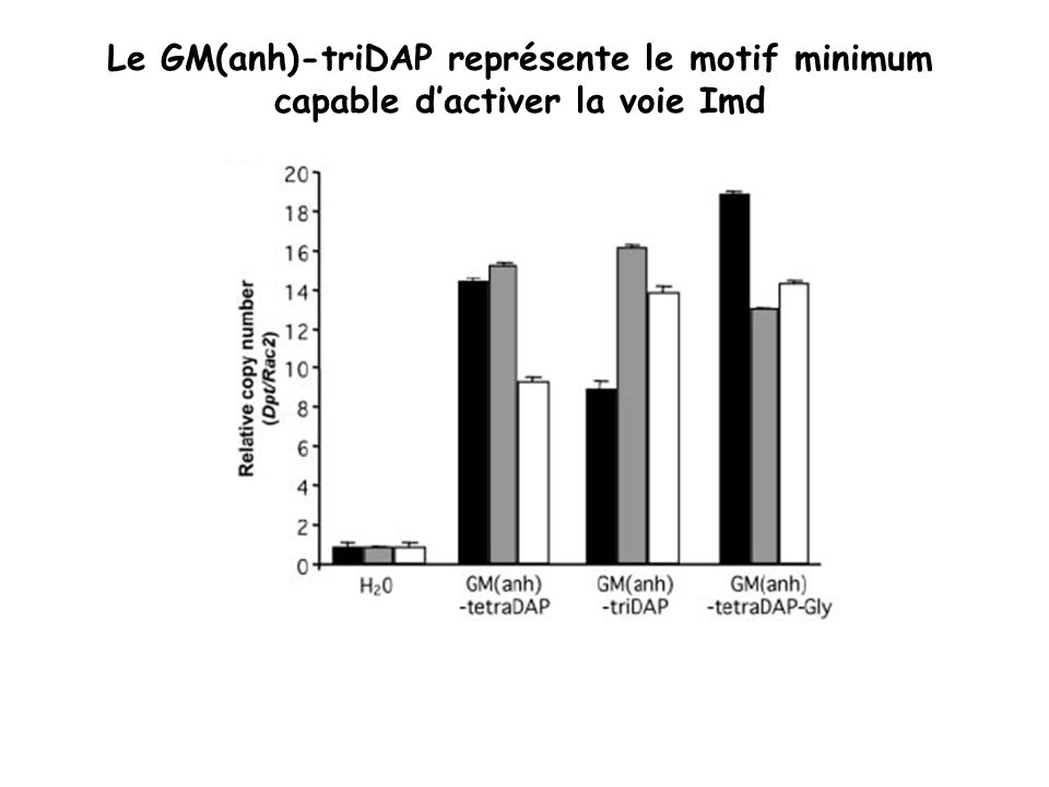 Le GM(anh)-triDAP représente le motif minimum capable dactiver la voie Imd