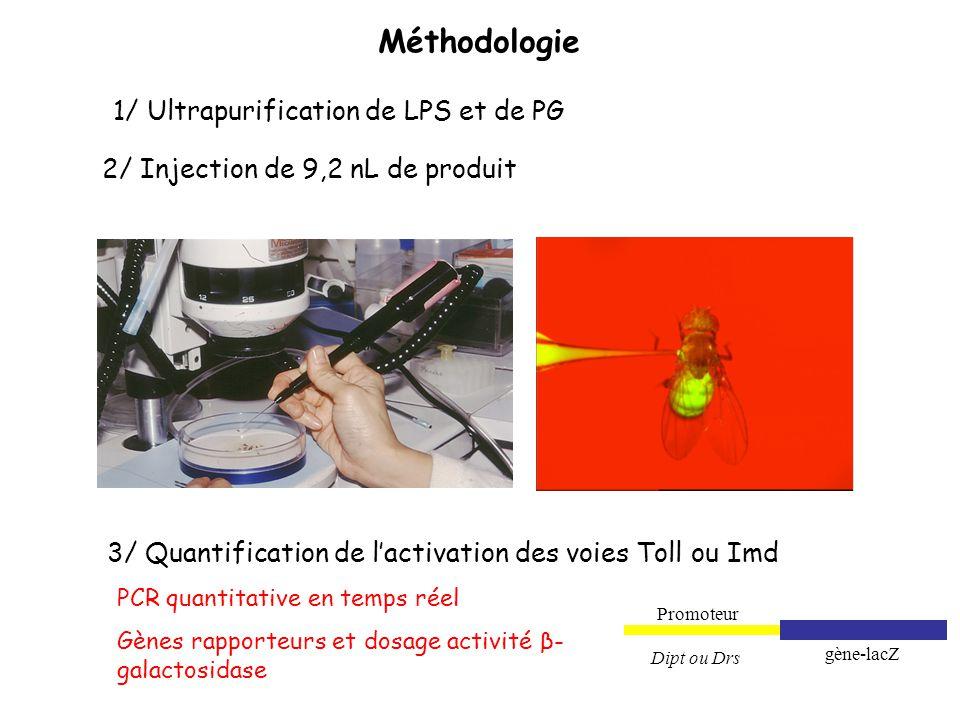 Méthodologie 1/ Ultrapurification de LPS et de PG 2/ Injection de 9,2 nL de produit 3/ Quantification de lactivation des voies Toll ou Imd PCR quantit