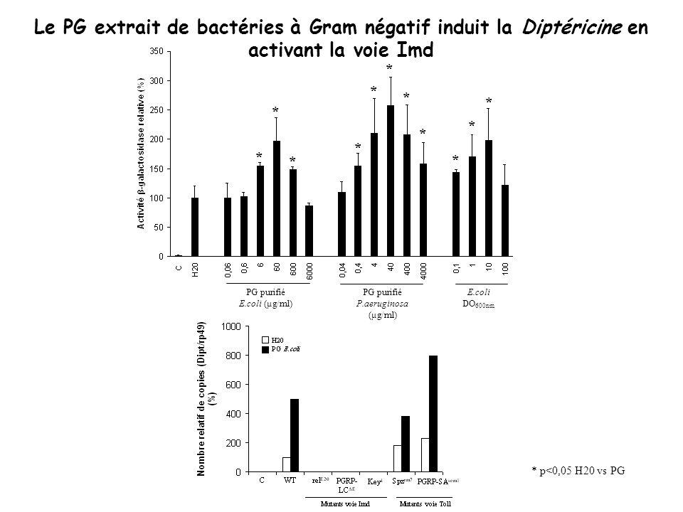 PG purifié E.coli (µg/ml) PG purifié P.aeruginosa (µg/ml) E.coli DO 600nm * * * * * * * * Le PG extrait de bactéries à Gram négatif induit la Diptéric