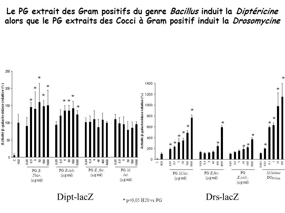 PG B. Thur. (µg/ml) PG B.sub. (µg/ml) PG E. fec. (µg/ml) PG M. lut. (µg/ml) * * * * * ** * * PG M.lut. (µg/ml) PG E.fec. (µg/ml) PG E.coli.. (µg/ml) M