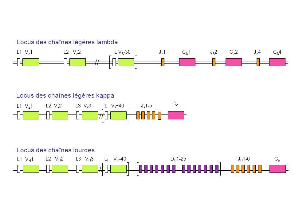 L1 V 1 L2 V 2 L V -30 J 1 C 1J 2 C 2 J 4C 4 L1 V 1 L2 V 2 L3 V 3 L V - 40 J 1-5 C L1 V H 1 L2 V H 2 L3 V H 3 L H V H -40 D H 1-25 J H 1-6 CµCµ Locus d