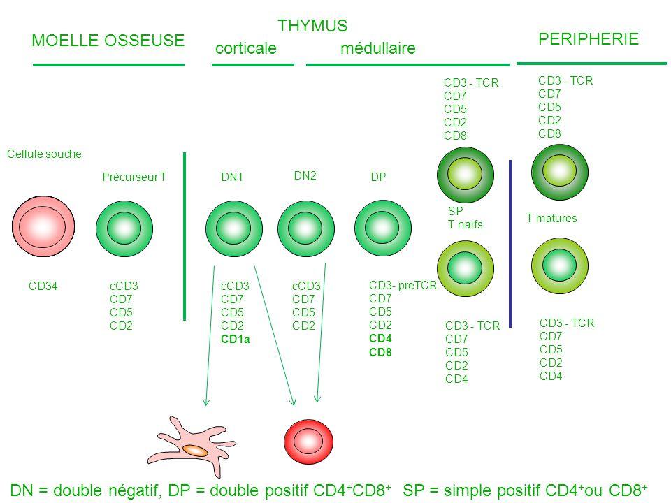Cellule souche Précurseur TDN1 SP T naïfs T matures CD34 cCD3 CD7 CD5 CD2 MOELLE OSSEUSE THYMUS corticalemédullaire cCD3 CD7 CD5 CD2 CD1a cCD3 CD7 CD5