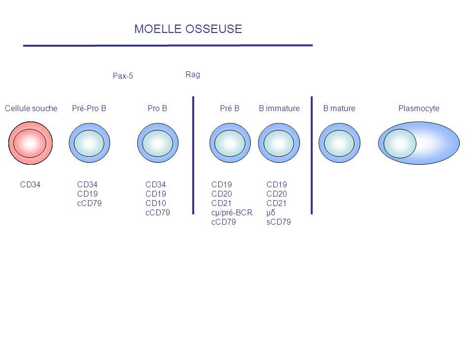 Cellule souchePré-Pro BPro BPré BB immatureB maturePlasmocyte CD34 CD19 cCD79 CD34 CD19 CD10 cCD79 CD19 CD20 CD21 cµ/pré-BCR cCD79 CD19 CD20 CD21 µδ s
