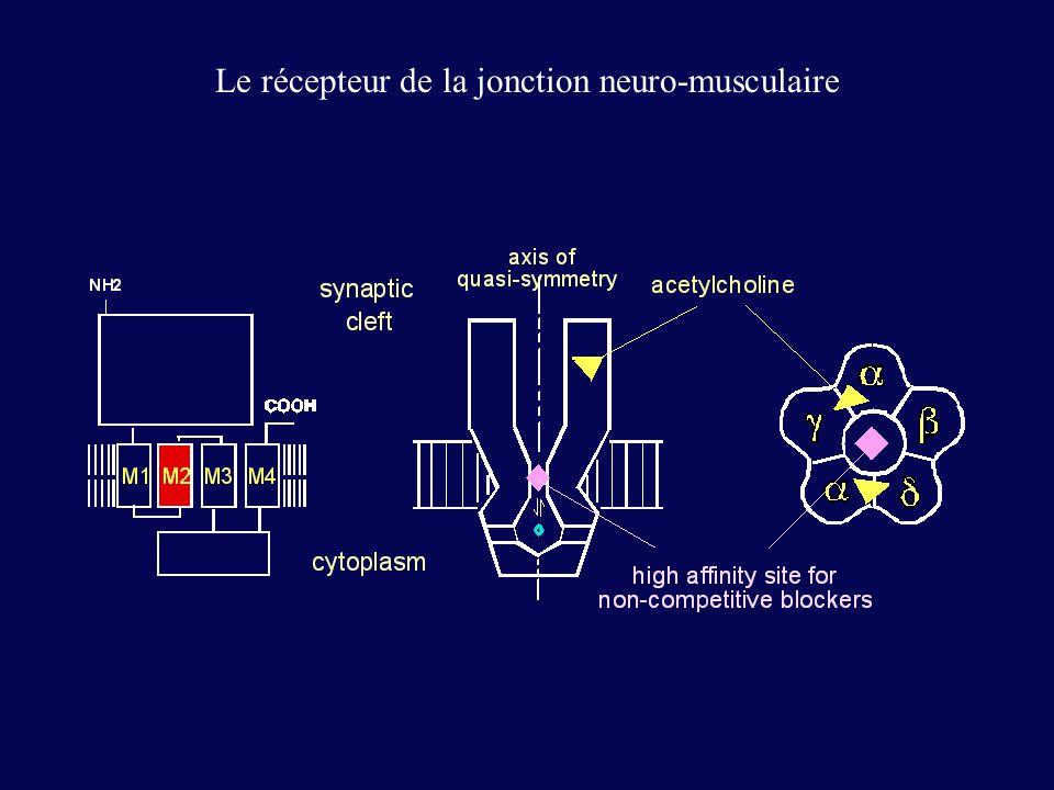 Le récepteur de la jonction neuro-musculaire