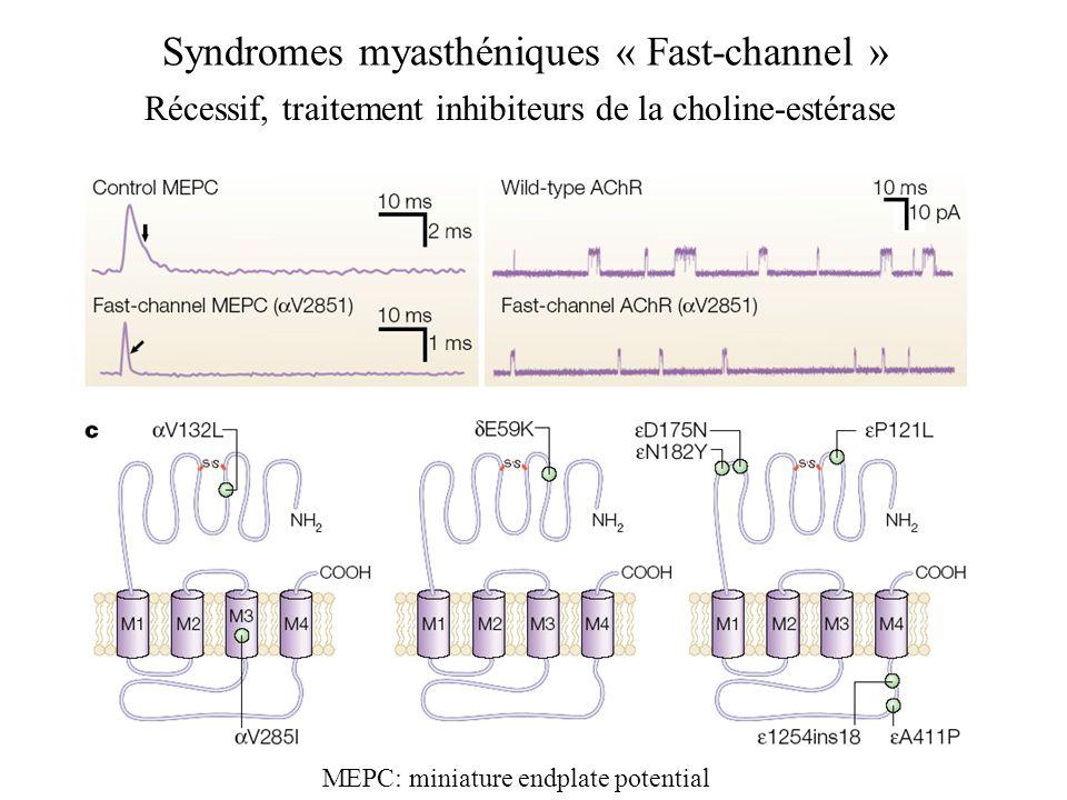 Syndromes myasthéniques « Fast-channel » MEPC: miniature endplate potential Récessif, traitement inhibiteurs de la choline-estérase