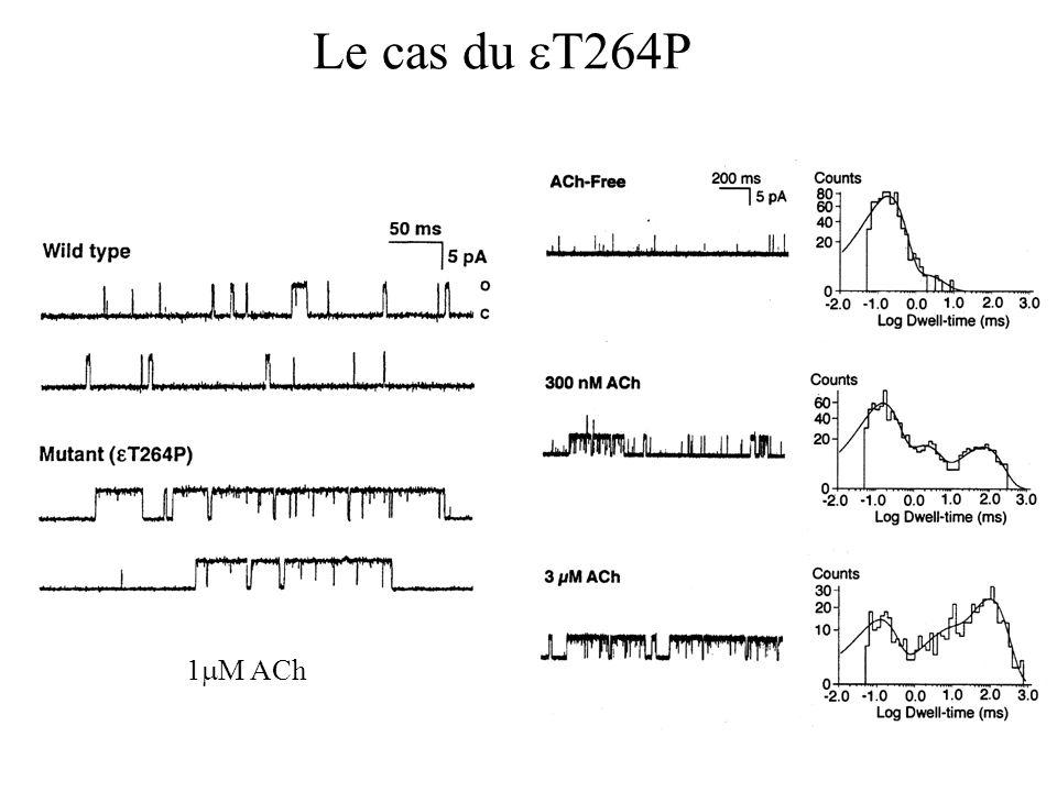 Le cas du T264P 1 M ACh