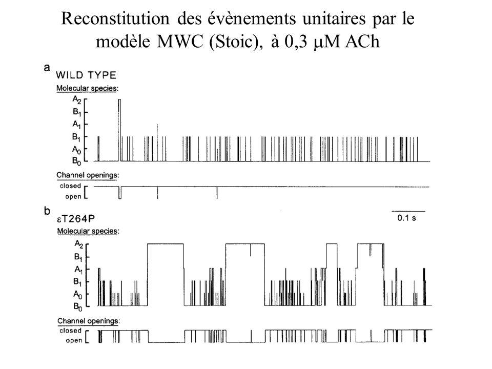 Reconstitution des évènements unitaires par le modèle MWC (Stoic), à 0,3 M ACh
