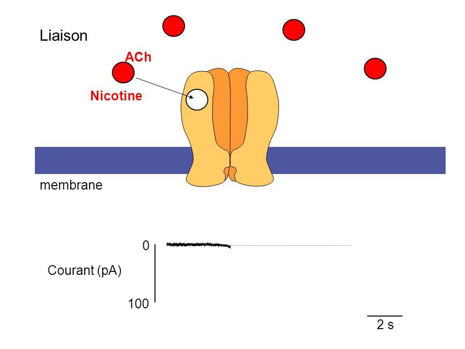 ACh 2 s membrane 100 0 Courant (pA) Liaison Nicotine