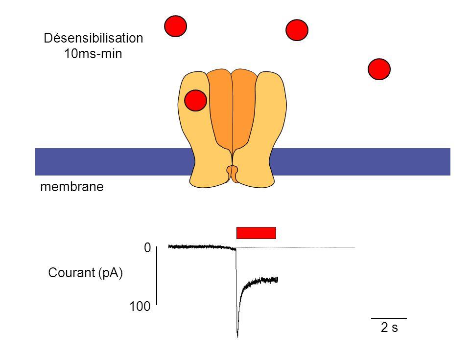 2 s membrane 100 0 Courant (pA) Désensibilisation 10ms-min