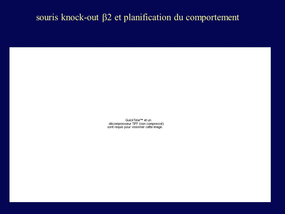 souris knock-out 2 et planification du comportement