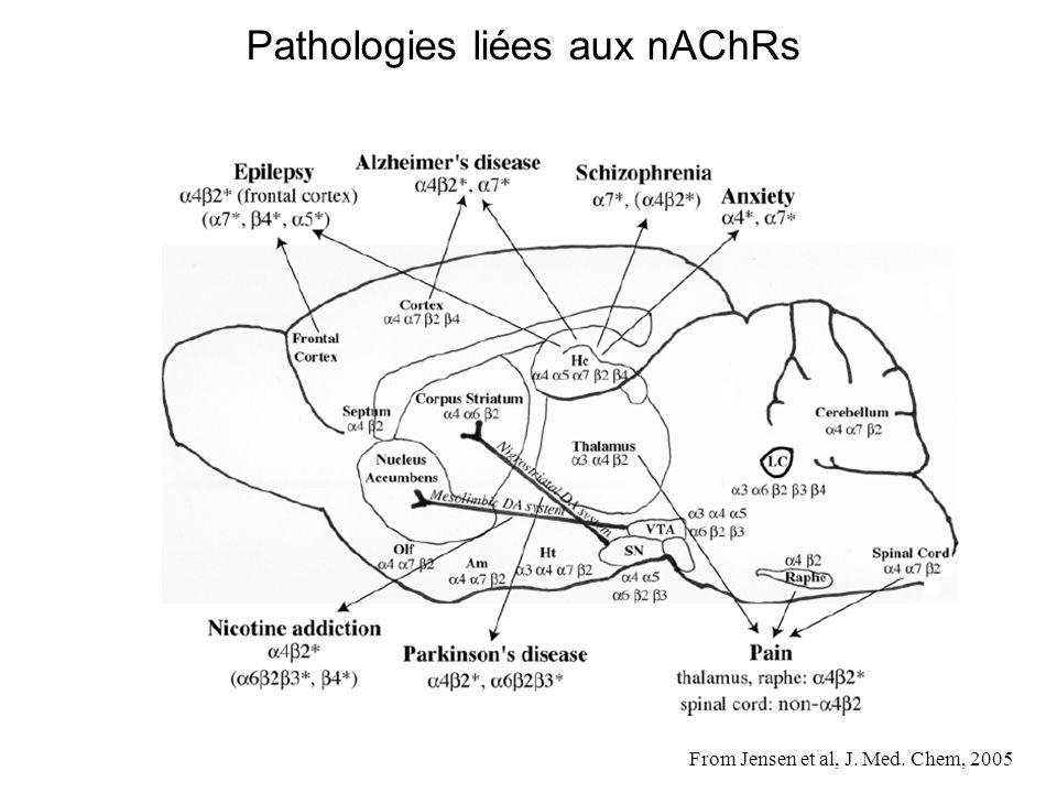 From Jensen et al, J. Med. Chem, 2005 Pathologies liées aux nAChRs