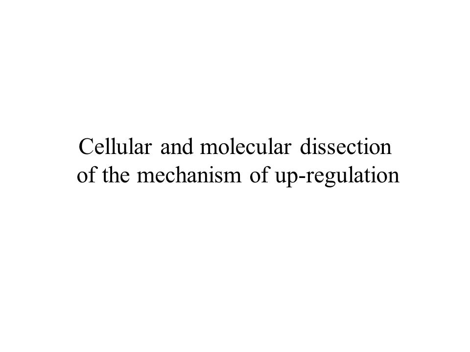 Cellular and molecular dissection of the mechanism of up-regulation