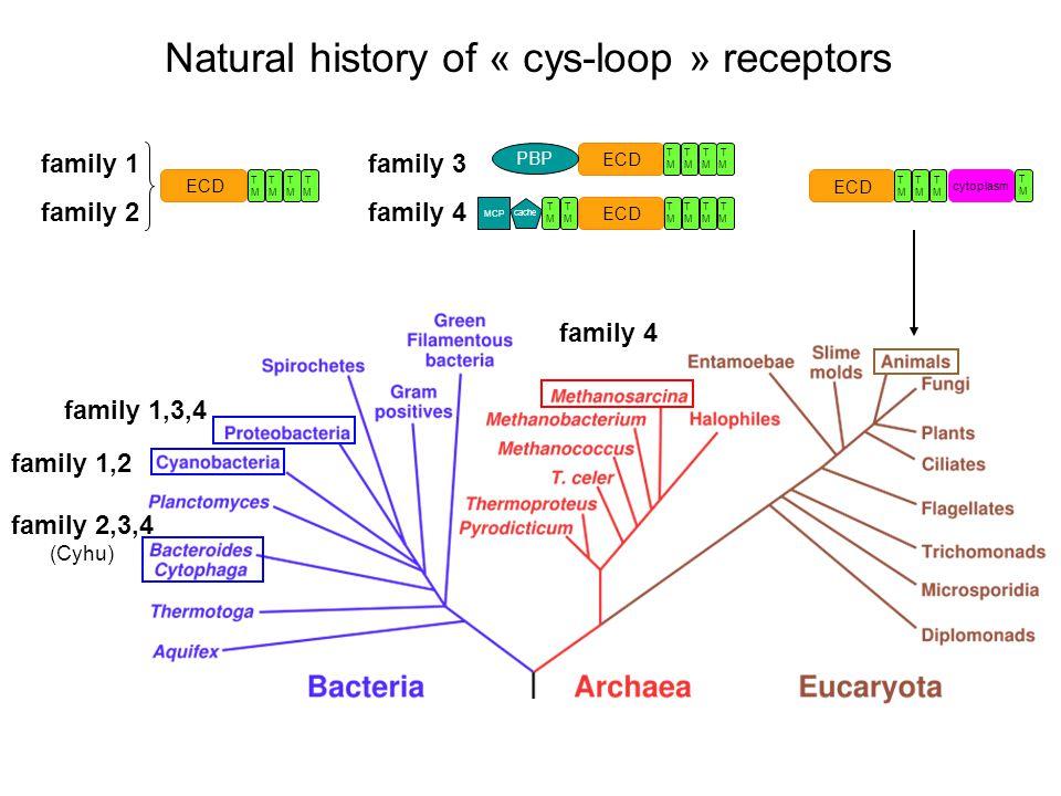T T M M ECD T T M M ECD PBP TMTM TMTM cache MCP T T M M ECD T T T M M M ECD cytoplasm TMTM family 1 family 2 family 4 family 2,3,4 (Cyhu) family 1,2 f