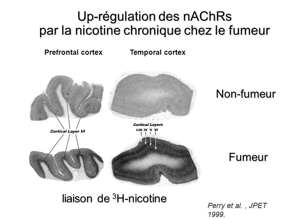 Perry et al., JPET 1999. Prefrontal cortexTemporal cortex Up-régulation des nAChRs par la nicotine chronique chez le fumeur liaison de 3 H-nicotine li
