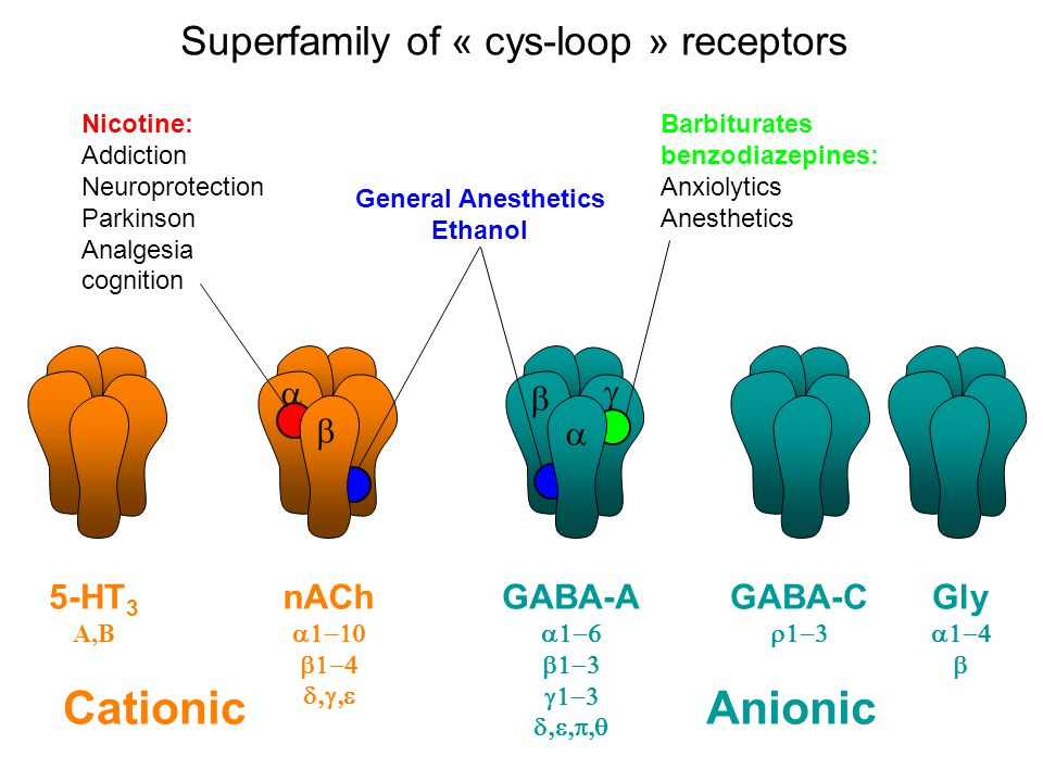 Éléménts de pharmacologie clinique des récepteurs cys-loop: 1- le récepteur nicotinique de la jonction neuro-musculaire et les Syndromes myasthéniques congénitaux 2- les récepteurs nicotiniques centraux et la dépendance à la nicotine 3- les récepteurs GABAA centraux et laction de benzodiazépines