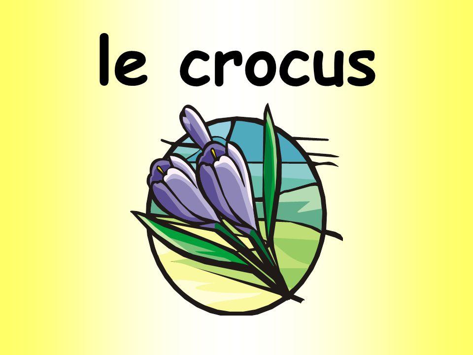le crocus
