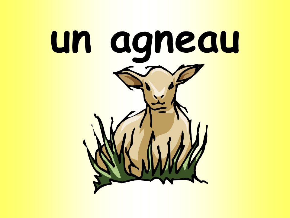 un agneau