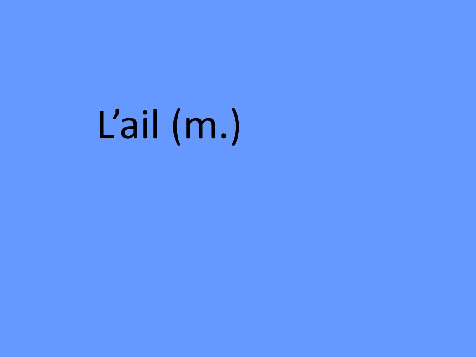 Lail (m.)