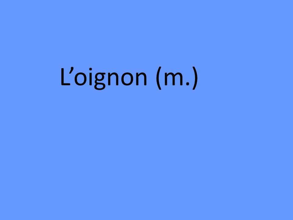 Loignon (m.)