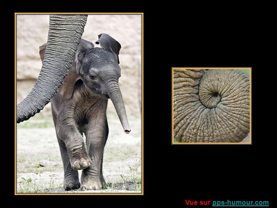 Lart ne te dit pourtant pas merci, Alors que tes pointes sculptées, Dans ses vitrines, dans ses musées, De ton ivoire le patrimoine senorgueillit ….