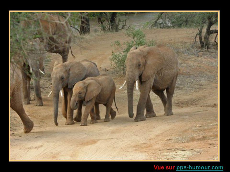 Pourtant, léléphant, Nes tu pas le seigneur Des terres brulées dAfrique, Et des forêts secrètes de lAsie .