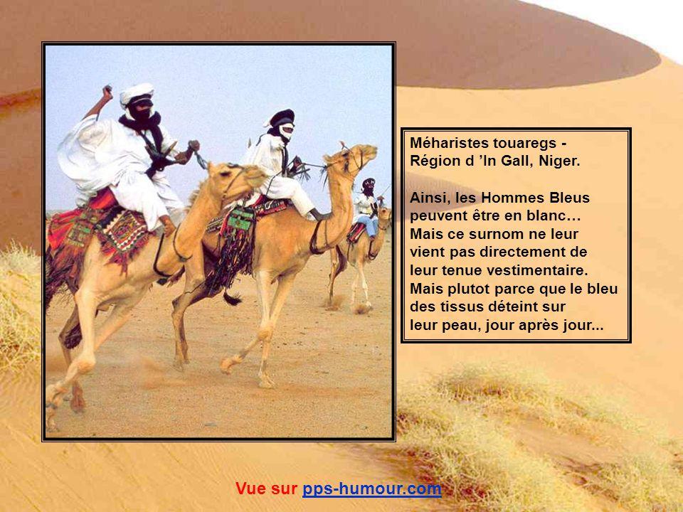 Mais les femmes ne sont pas toujours à la fête… Femme Toubou chargée de branches de palmier... Vue sur pps-humour.compps-humour.com