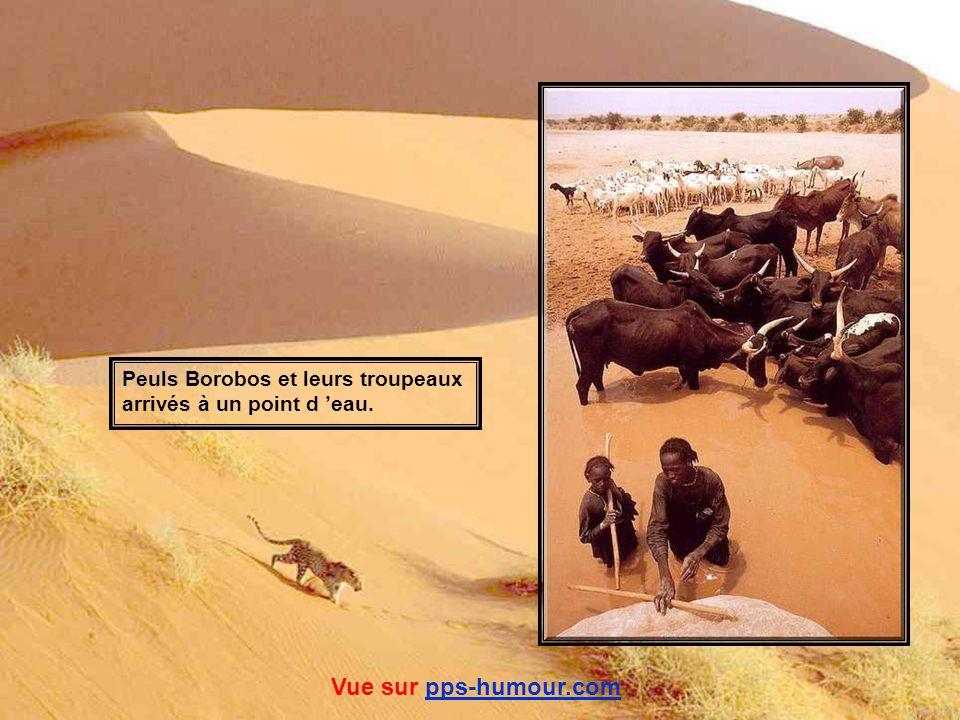 Guerrier Chaambi Vue sur pps-humour.compps-humour.com