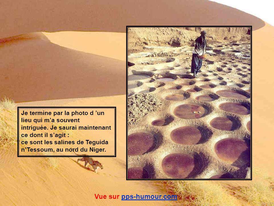 Peuls Borobos et leurs troupeaux arrivés à un point d eau. Vue sur pps-humour.compps-humour.com