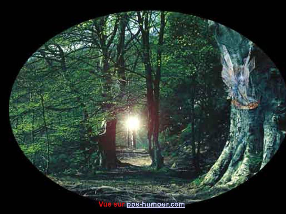 La mystérieuse forêt d Andaine est profonde et sauvage.