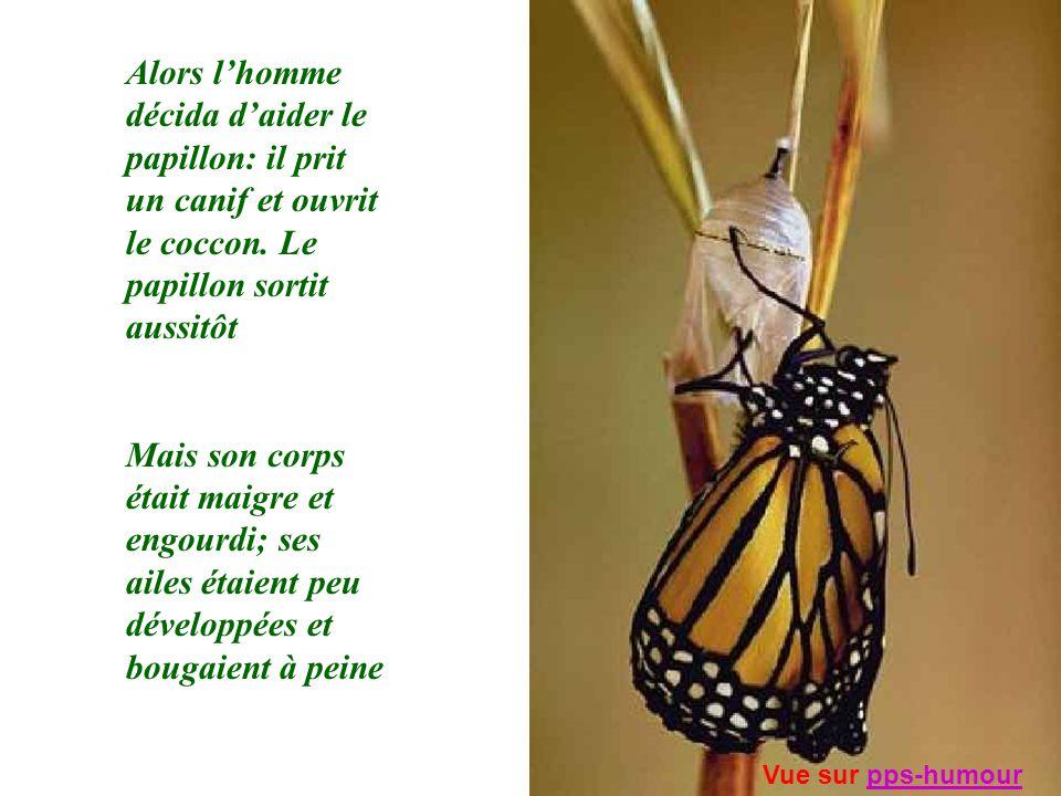 Alors lhomme décida daider le papillon: il prit un canif et ouvrit le coccon. Le papillon sortit aussitôt Mais son corps était maigre et engourdi; ses
