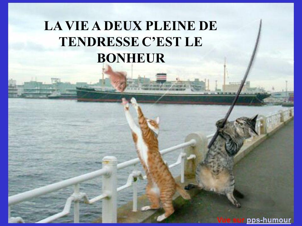 Les meilleures photos de L année 2005 D après NBC LA VIE A DEUX PLEINE DE TENDRESSE CEST LE BONHEUR Vue sur pps-humourpps-humour