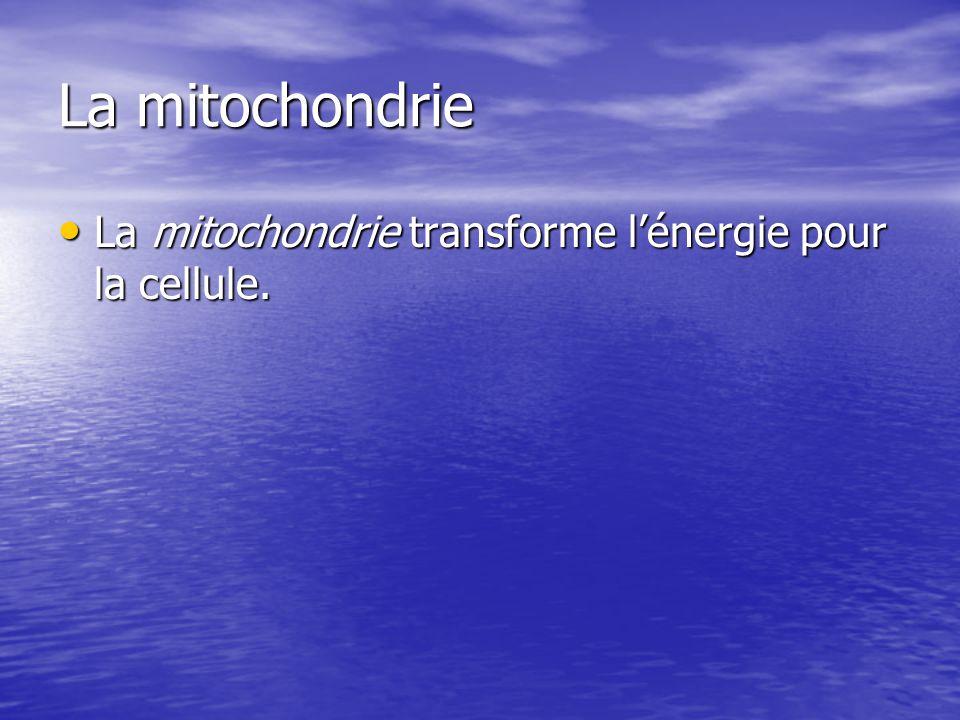 La mitochondrie La mitochondrie transforme lénergie pour la cellule. La mitochondrie transforme lénergie pour la cellule.