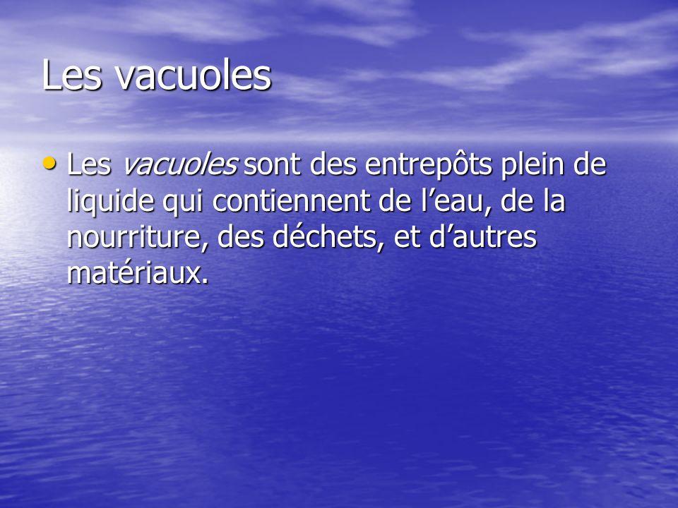 Les vacuoles Les vacuoles sont des entrepôts plein de liquide qui contiennent de leau, de la nourriture, des déchets, et dautres matériaux. Les vacuol