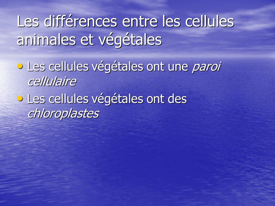 Les différences entre les cellules animales et végétales Les cellules végétales ont une paroi cellulaire Les cellules végétales ont une paroi cellulai
