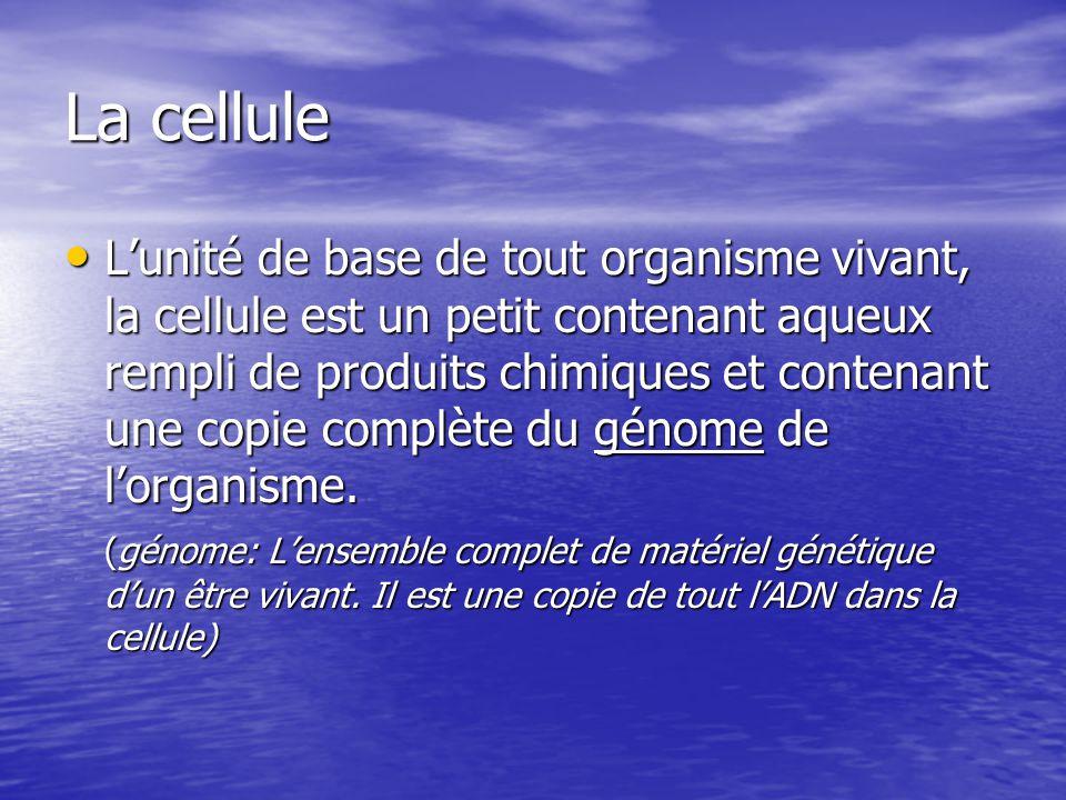 Lunité de base de tout organisme vivant, la cellule est un petit contenant aqueux rempli de produits chimiques et contenant une copie complète du géno