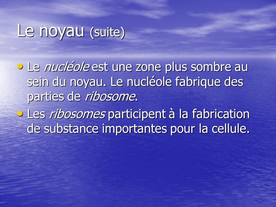 Le noyau (suite) Le nucléole est une zone plus sombre au sein du noyau. Le nucléole fabrique des parties de ribosome. Le nucléole est une zone plus so