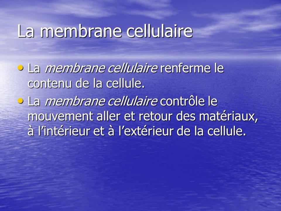 La membrane cellulaire La membrane cellulaire renferme le contenu de la cellule. La membrane cellulaire renferme le contenu de la cellule. La membrane