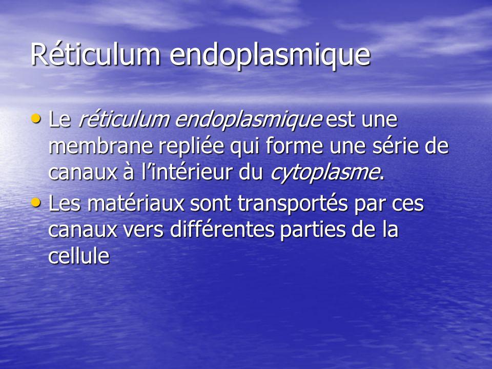 Réticulum endoplasmique Le réticulum endoplasmique est une membrane repliée qui forme une série de canaux à lintérieur du cytoplasme. Le réticulum end