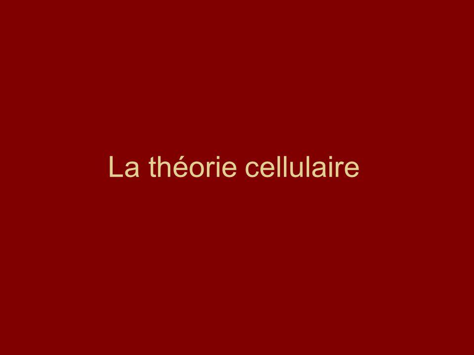 La théorie cellulaire
