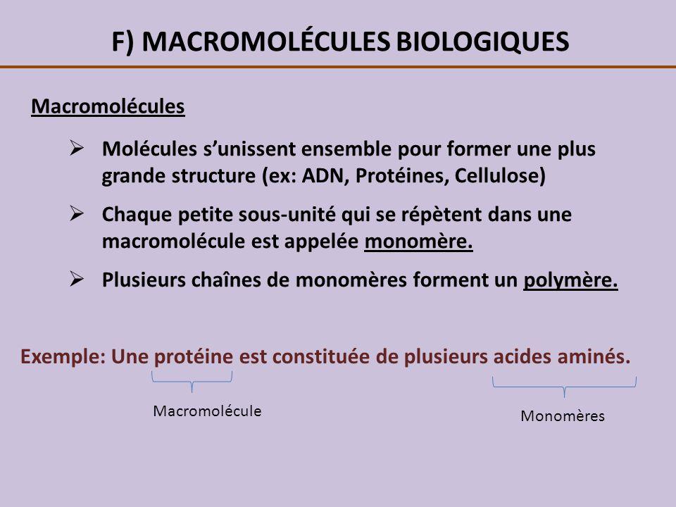 F) MACROMOLÉCULES BIOLOGIQUES Macromolécules Molécules sunissent ensemble pour former une plus grande structure (ex: ADN, Protéines, Cellulose) Chaque