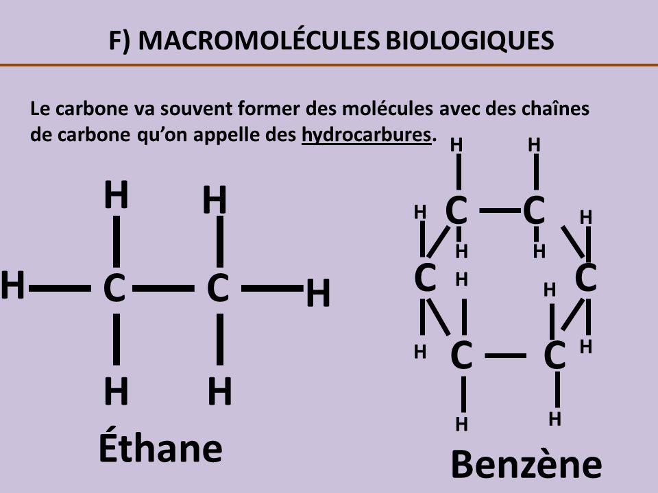 F) MACROMOLÉCULES BIOLOGIQUES Le carbone va souvent former des molécules avec des chaînes de carbone quon appelle des hydrocarbures. CC H H H HH H Éth