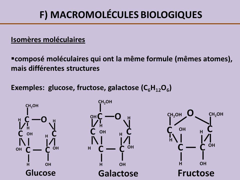 F) MACROMOLÉCULES BIOLOGIQUES Il existe 2 types disomères: 1.Isomères structuraux:composés ayant les mêmes atomes, mais liés différemment (ex: glucose et fructose) 2.Stéréo-isomères:composés ayant les mêmes atomes liés de la même manière, mais disposés différemment dans lespace (ex: glucose et galactose)