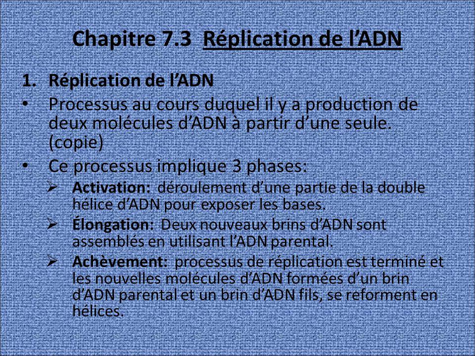 Chapitre 7.3 Réplication de lADN 1.Réplication de lADN Processus au cours duquel il y a production de deux molécules dADN à partir dune seule. (copie)