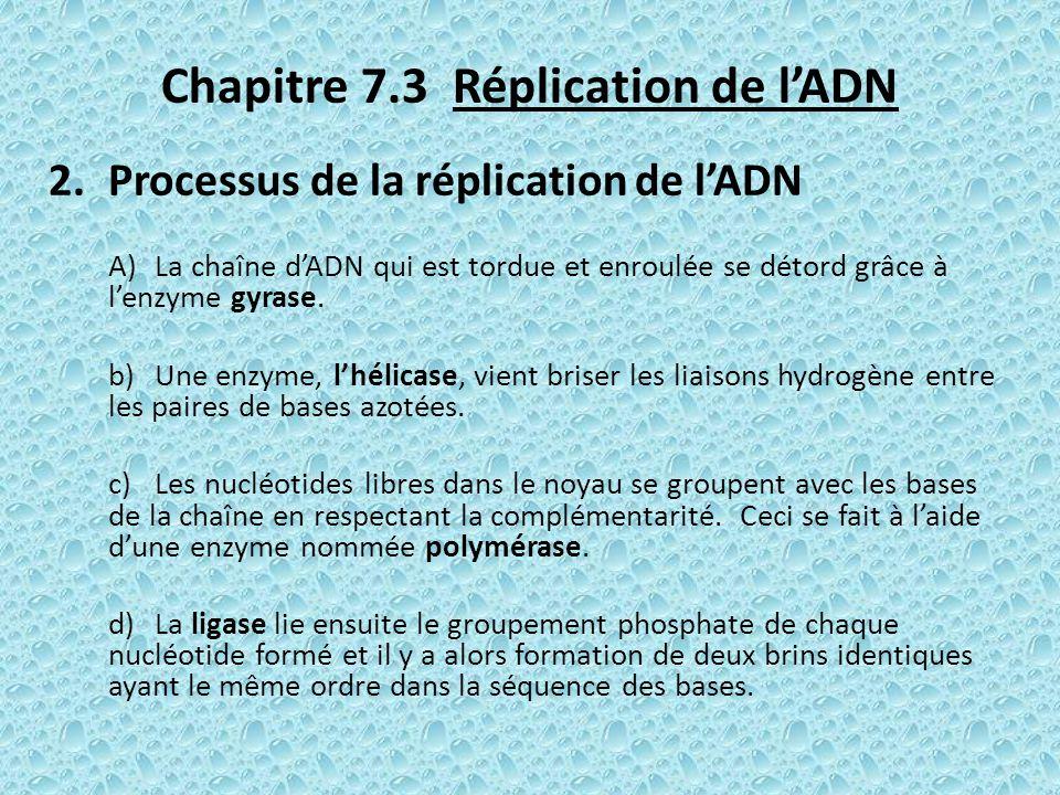 Chapitre 7.3 Réplication de lADN 2.Processus de la réplication de lADN A)La chaîne dADN qui est tordue et enroulée se détord grâce à lenzyme gyrase. b