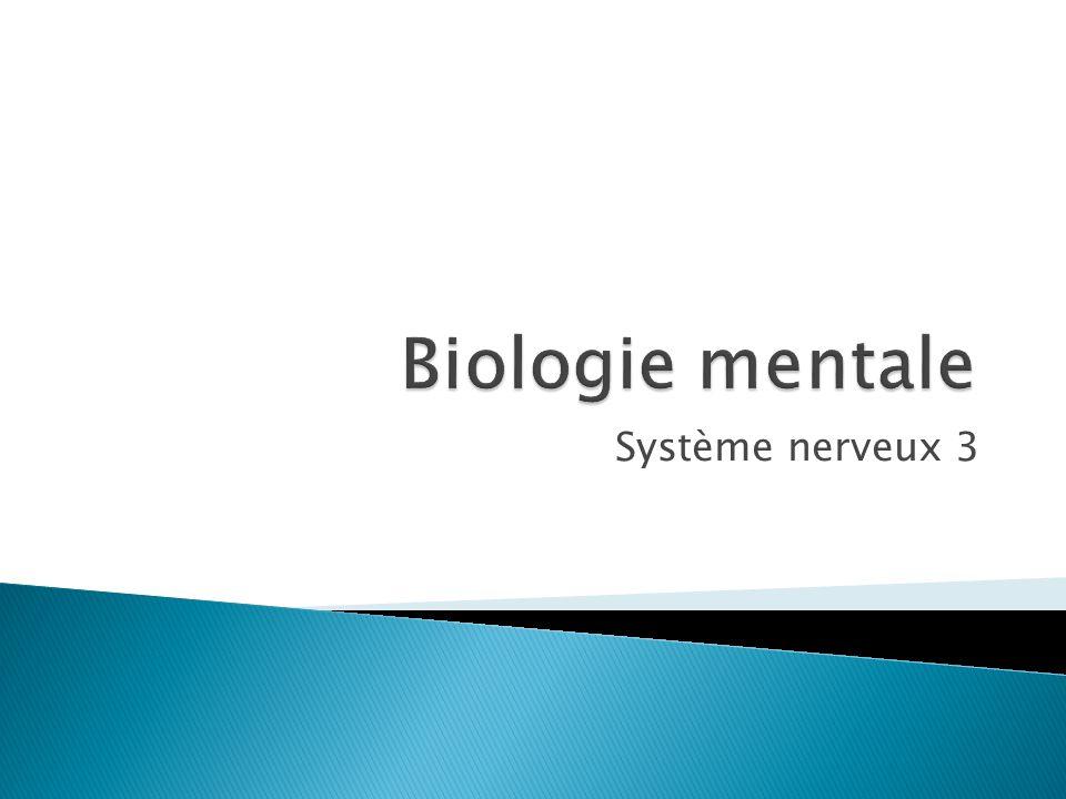 Système nerveux 3