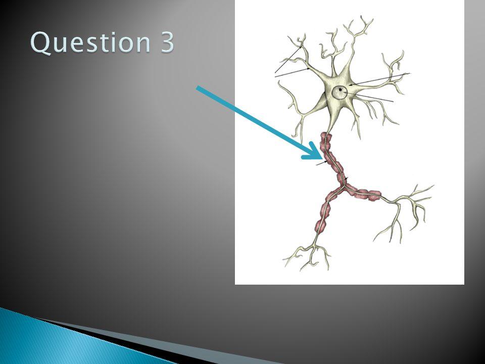 1.Axone 2.Dendrite 3.Gaine de myéline 4.Moteur 5.Interneurone 6.Sensitif 7.