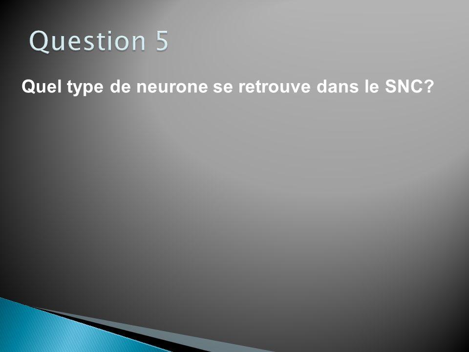 Quel type de neurone conduit le message nerveux du SNC vers la périphérie?