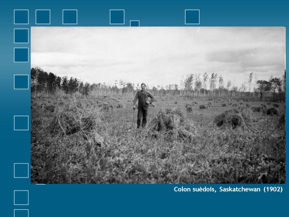Colon suèdois, Saskatchewan (1902)