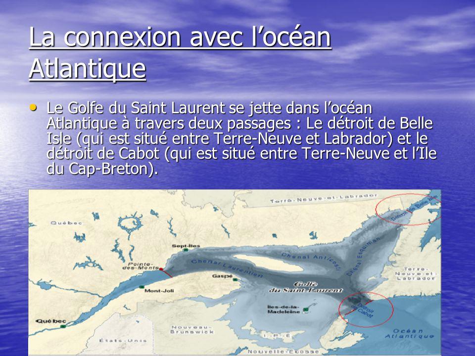 La connexion avec locéan Atlantique Le Golfe du Saint Laurent se jette dans locéan Atlantique à travers deux passages : Le détroit de Belle Isle (qui