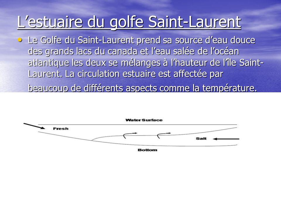 Lestuaire du golfe Saint-Laurent Le Golfe du Saint-Laurent prend sa source deau douce des grands lacs du canada et leau salée de locéan atlantique les